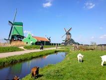 Zaandam-Windmühlen Stockfoto