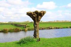 Zaanse Schans在荷兰 免版税库存图片