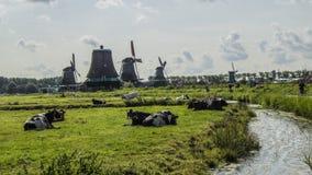 Zaanse Schans, ветрянки Стоковые Фотографии RF