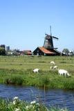 Zaanse Schans nei Paesi Bassi. Fotografia Stock