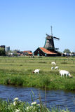 Zaanse Schans in Netherlands. Stock Photo