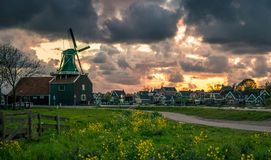 Zaanse Schans windmill landscape in the Netherlands, sunset cloudy sky. Meadow wth yellow flowers Royalty Free Stock Photo