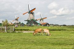 Zaanse Schans With People Windmills And Cows Stock Photo