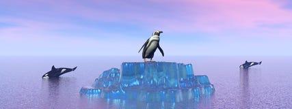 Zabójcy morze i wieloryb ilustracji