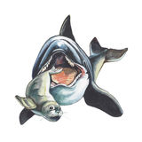 zabójcy wieloryb Zdjęcia Stock