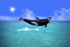 zabójcy wieloryb Zdjęcie Stock