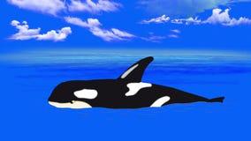 Zabójcy wieloryb ilustracja wektor