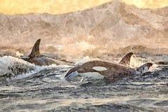 Zabójcy wieloryb skacze z wody Malowa? mokr? akwarel? na papierze Naiwna sztuka Rysunkowa akwarela na papierze royalty ilustracja