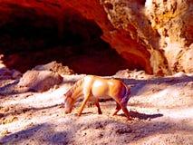 Zabawkarski koń Fotografia Royalty Free