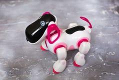 Zabawkarski robota biel, menchie na betonowym tle i, Pies jest robotem Fotografia Royalty Free