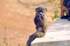 zabawna małpa Fotografia Stock