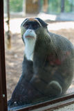 zabawna małpa Obrazy Stock