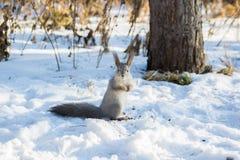 zabawna wiewiórka Obraz Royalty Free