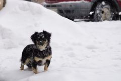 zabawny mały pies fotografia stock