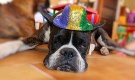 zabawny pies Zdjęcie Royalty Free