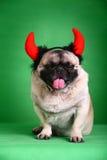 zabawny pies pet fotografia stock