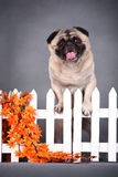 zabawny pies pet obrazy stock
