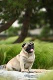 zabawny pies pet zdjęcie royalty free