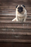 zabawny pies pet obraz royalty free
