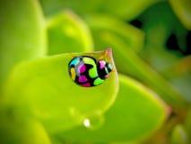 zabawy ladybird Obraz Stock