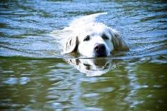 zabawy psi lato Obrazy Stock