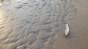 zabić plażowy odznaczony zagrożenie obraz ryb wspiął się symbolem obrazy stock