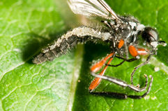 zabity grzybowy insekt obrazy royalty free