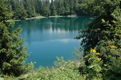 Zaboj lake. Zabojsko lake surrounded by dense coniferous and beech forests, located in the northeastern part of Sinjajevine at an altitude of 1,477 meters. Due stock photo