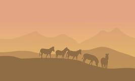 Zabra in woestijnlandschap Stock Afbeeldingen