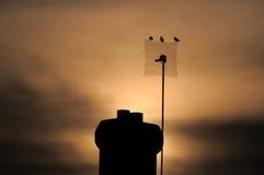 zachód słońca youghal Zdjęcie Stock