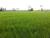 Zachodni Jawa krajobraz Zdjęcie Royalty Free