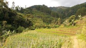 Zachodni Jawa krajobraz 14 Zdjęcia Stock