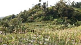 Zachodni Jawa krajobraz 15 Obraz Royalty Free