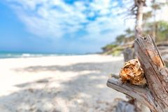 Zachodni plażowy darß przegapia morze zdjęcie royalty free