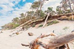 Zachodni plażowy darß przegapia morze fotografia stock