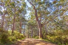 Zachodni przylądka Howe park narodowy zdjęcia royalty free