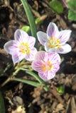 Zachodni wiosny piękno obraz stock
