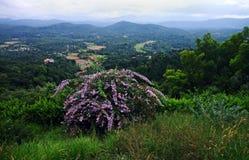 Zachodnia ghats dolina i dzicy kwiaty Obrazy Royalty Free