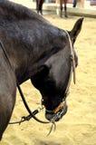 Zachodnia końska fotografia zdjęcie royalty free