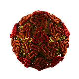 Zachodniego Nil wirus - odizolowywający na bielu Fotografia Stock