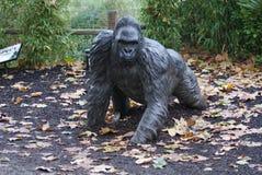Zachodniej niziny goryl Silverback - goryla goryla goryl - Zdjęcie Royalty Free