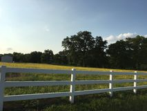 Zachodniej Teksas zatoczki Złota łąka Zdjęcia Royalty Free