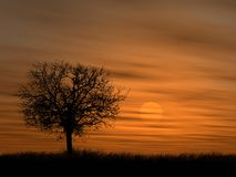 zachodzącego słońca ponad drzewem Ilustracja Wektor