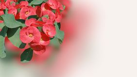 Zacht de lentepoy sian bloeit achtergrond, behang royalty-vrije stock afbeeldingen