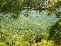 Zacht hellende die berg, door bos wordt behandeld Stock Foto's