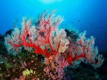 Zacht koraal Royalty-vrije Stock Afbeelding