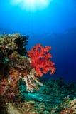 Zacht koraal en zonnestraal - het Barrièrerif van Sipadan royalty-vrije stock foto's