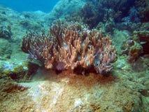 Zacht koraal, gebied van de stad van Nha Trang, Vietnam Royalty-vrije Stock Afbeeldingen
