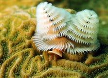 Zacht koraal in oceaan Stock Foto's