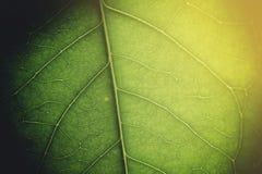 Zacht licht op groen blad Royalty-vrije Stock Afbeelding
